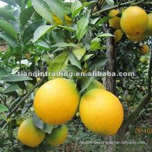 2012 neue Ernte Nabel Orange