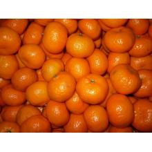 Chinese High Quality Fresh Baby Mandarin