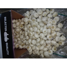 New Pure White Garlic Best Quality