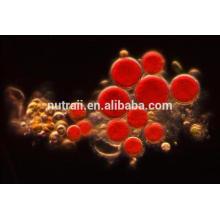 Naturaleza Haematococcus Pluvialis extracto / polvo de astaxantina