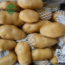 China Potato Market Agriculture Fresh Potato