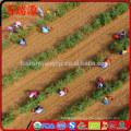 Goji berries where to buy winn-dixiechocolate goji berries where to buy goji berries where to buy it