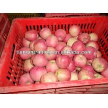 Export frischer roter köstlicher Apfelfrucht frischer Apfel