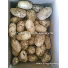 Pommes de terre fraîches en France