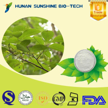 Hierba china natural Eucommia Ulmoides Extracto de hoja