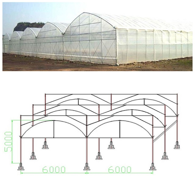 Multi Span Plastic Film Greenhouse