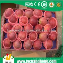 Qinguan Apfel