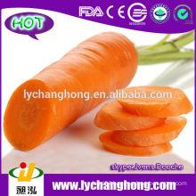 2014 New Crop Fresh Carrot Market Price
