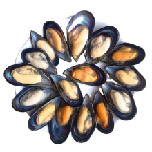 cheap shellfish frozen fresh half shell mussel meat