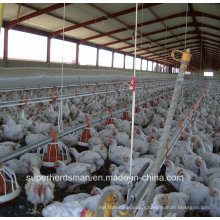 Automaitc Poultry Breeding Equipment for Broiler Production