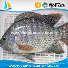 Paquet en vrac tout le prix du tilapia ronde Oreochromis Niloticus