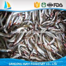 bqf frozen fresh anchovies fish bait local catching