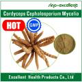 Cordyceps Cephalosporium Mycelia, Cordyceps Extract