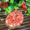 2017 новый урожай супер годжи супер еда годжи из нинся zhongning