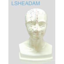 Modelo de cabeza de acupuntura