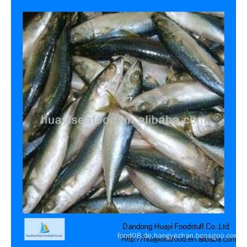 Gefrorene mackerel
