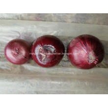Best Quality Red Onion 2020