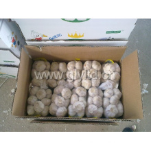 Good Quality New Crop Fresh White Garlic