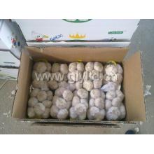 Хорошее качество Новый урожай Свежий белый чеснок