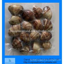 vacuum short necked clam