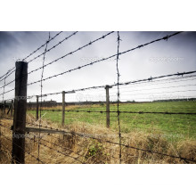 Barbed Wire/Barbed Wire Fence