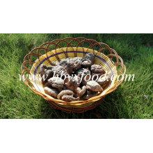 Exporter Smooth Shiitake champignons 1kgs Pack avec bouchon 4-6cm et sans tige