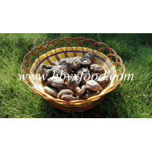 Export Smooth Shiitake Mushrooms 1kgs Pack with Cap 4-6cm and No Stem