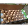 Top Quality New Crop Fresh Kiwi