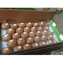 Qualité supérieure pour l'exportation de kiwi frais