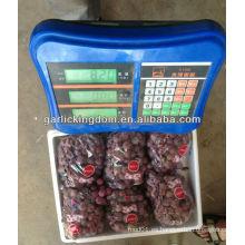 Nuevo cultivo fresco rojo global uva