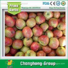 2015 New Crop Jiguan Apple