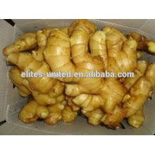 High Quality&Best Price 2014 Fresh Ginger