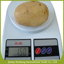Natural fresh China potato price
