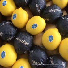 Frische Zitrusfrucht-Eureka-Zitronen zu verkaufen