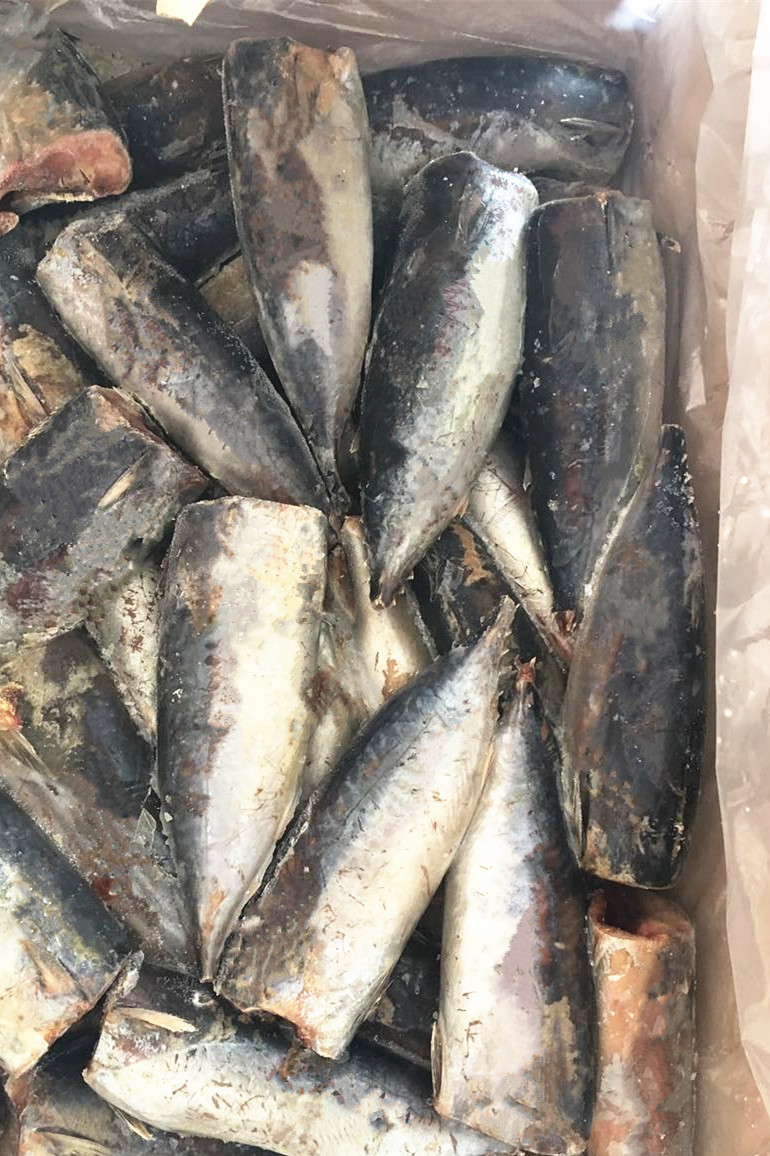 Frozen Bonito HGT in Season
