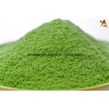 Poudre d'herbe de blé instantanée naturelle