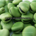 Popular Products Dry Broad Beans