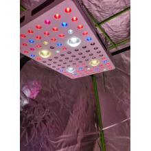 Phlizon 2000W COB LED élèvent la lumière