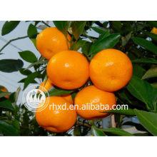 Frischer Orangen- und Mandarinen-Sack