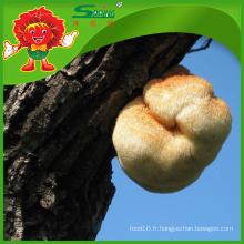 Vente en gros de champignons séchés au champignon biologique Hericium Erinaceus