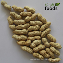 Peanuts Prices/Groundnut Prices