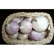 New 5.5cm Chinese Normal White Fresh Garlic