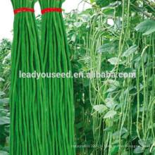 MBE03 Youqi haut rendement asperges chinois graines de haricots longs société