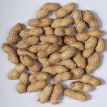 Peanut à Shell