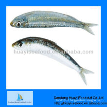 Preço da sardinha marisco congelado fresco peixe da sardinha