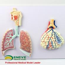 LUNG06(12503) модель раздел системы Respriratory человека, Анатомия модели > респираторных