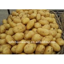 Patata fresca china 2011 otoño