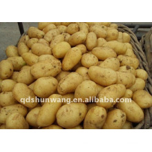 Китайский свежий картофель 2011 осень