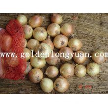 Fresh Yellow Onion Wholesale Price for Selling