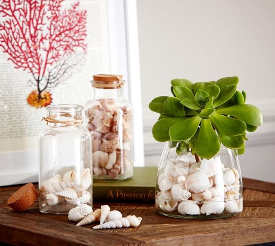 Seashell For Home Decoration